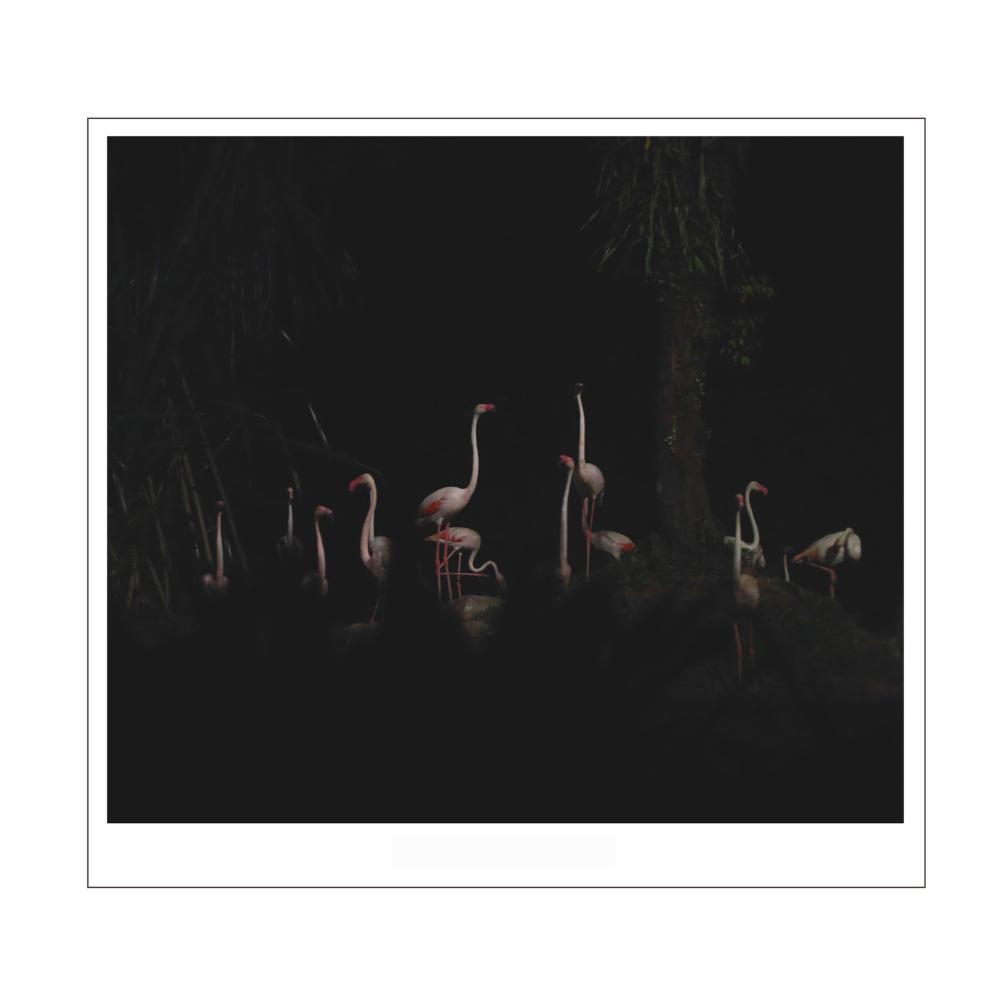 Night zoo safari flamingo
