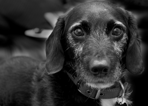 Photograph of my dog, Ollie
