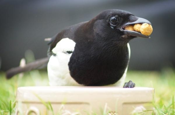 Bird eating dog food