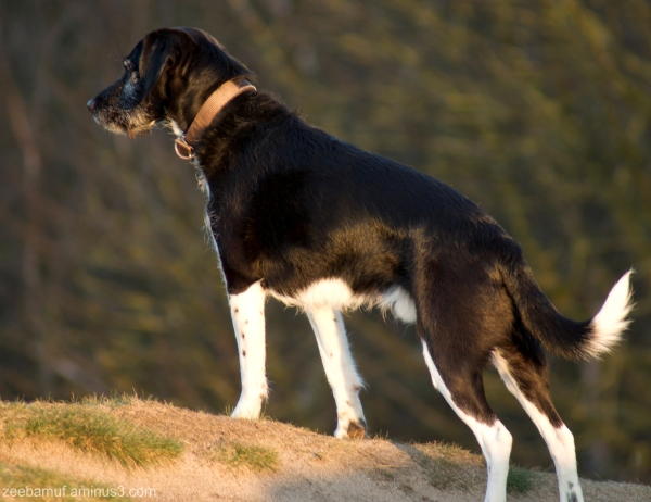 black rocks dog