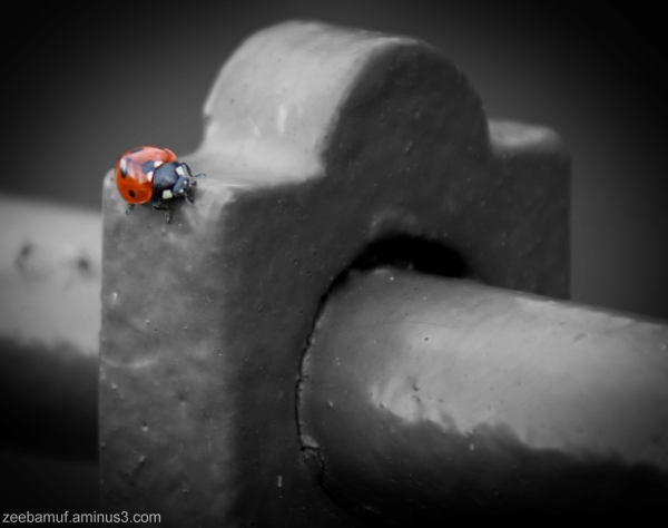 Ladybird in Wollaton Park
