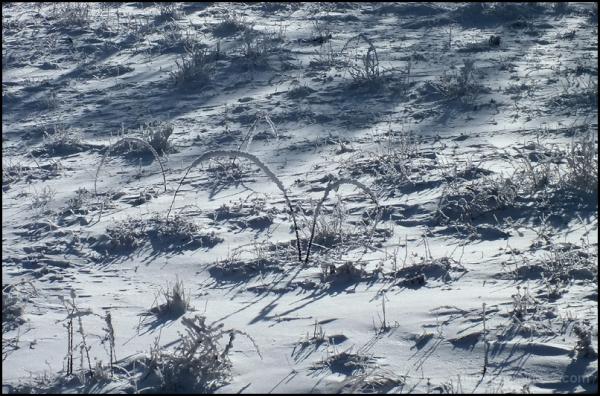 champs de neige