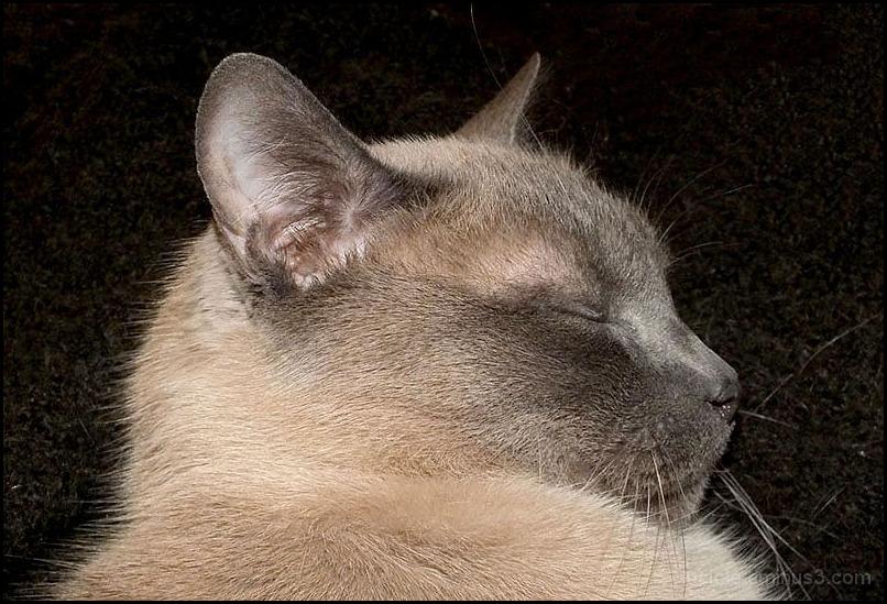 Sasha le chat