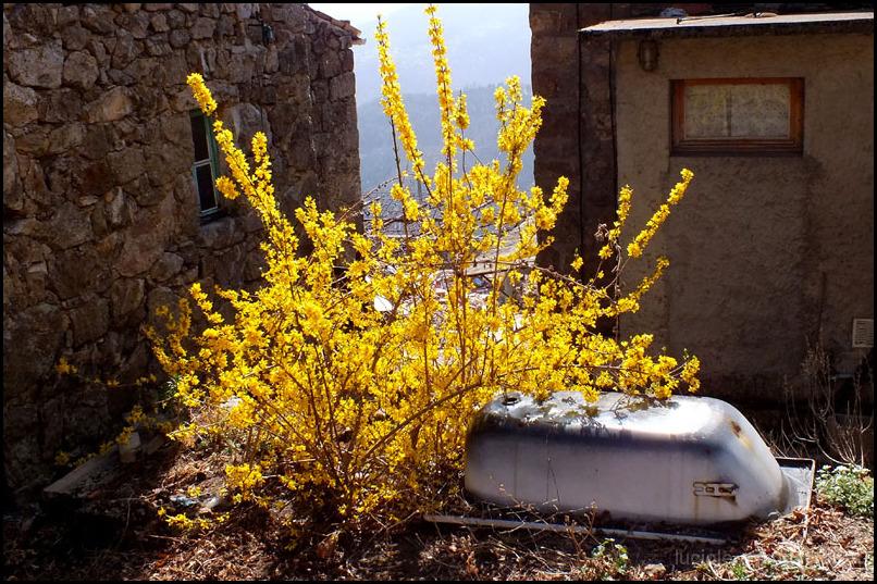 Baignoire et fleurs