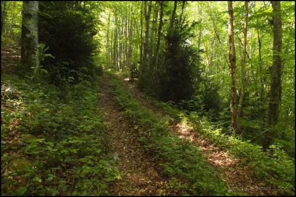 chemin en sous-bois