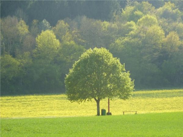un arbre seul devant les autres
