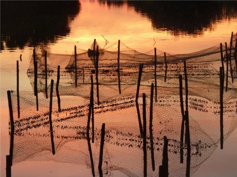 des filets au soleil couchant sur un lac