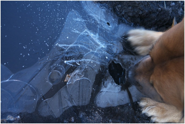 attila likes ice