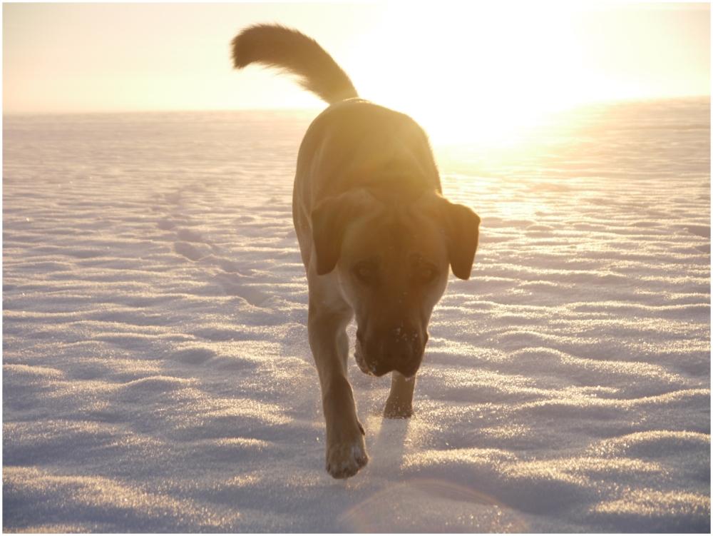 loki likes snow