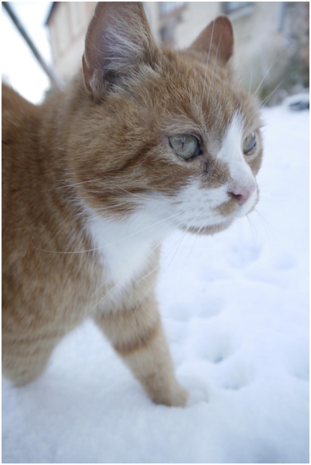 does elvis like snow?
