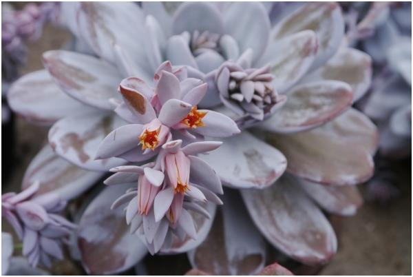 botanic miracle