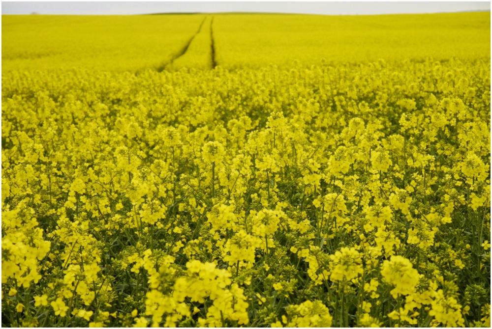 so... yellow.