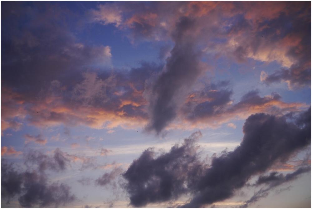 pájaro de nubes