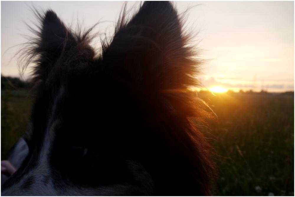 magnus el magnífico and magnificient sunset