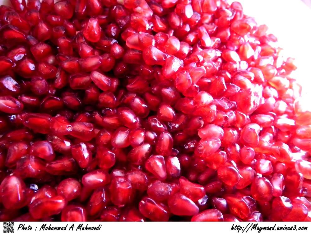 Pomegranate in Winter 3