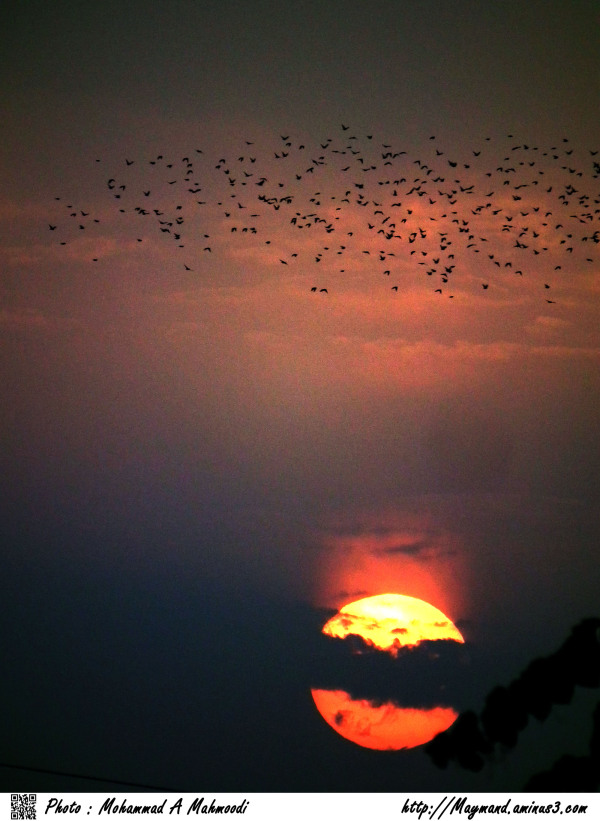 Sunset and Migration