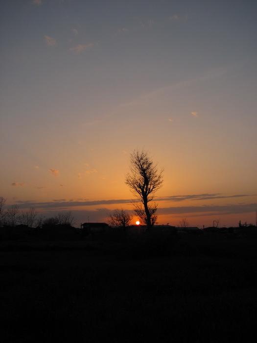 درخت پیر