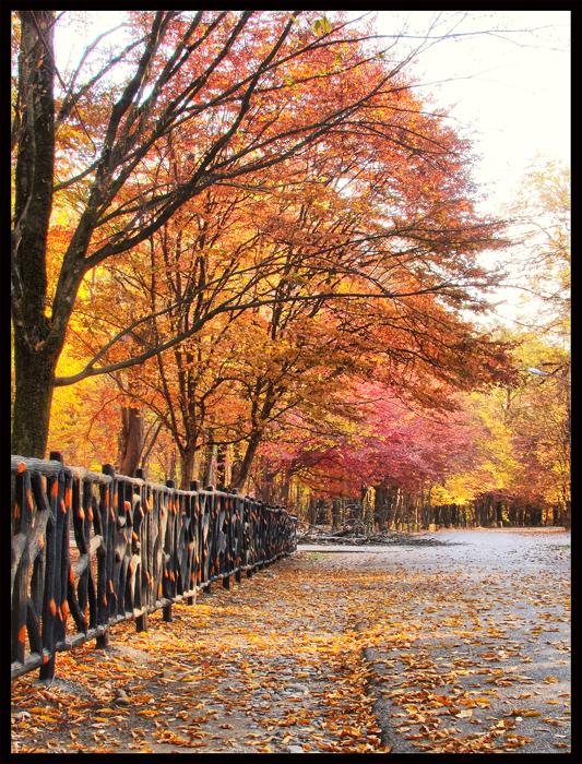 پاییز - autumn