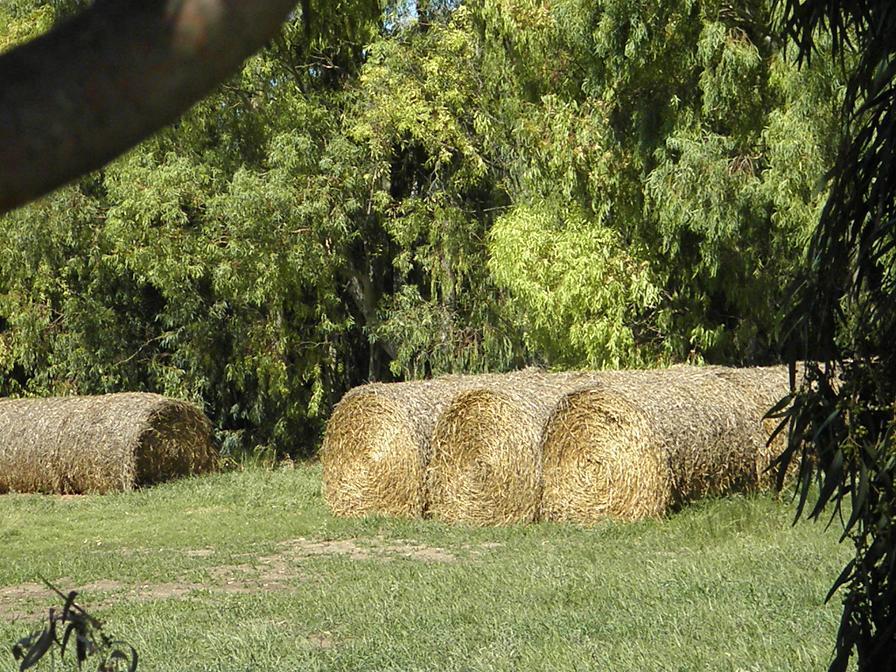 Los fardos listos para alimentar el ganado