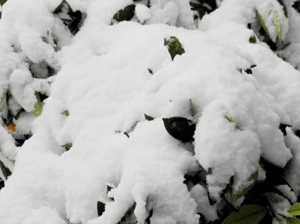 Nieve en Tres Arroyos 3/12