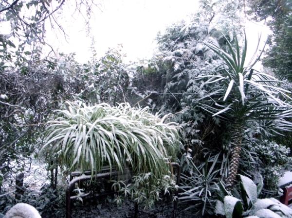 Nieve en Tres Arroyos 4/12