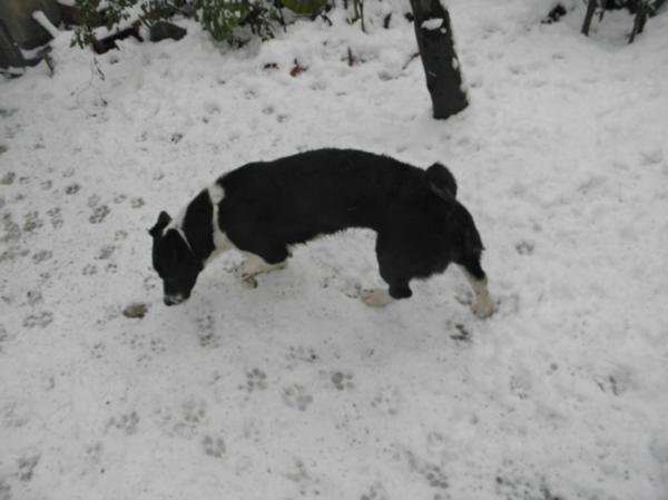 Nieve en Tres Arroyos 5/12