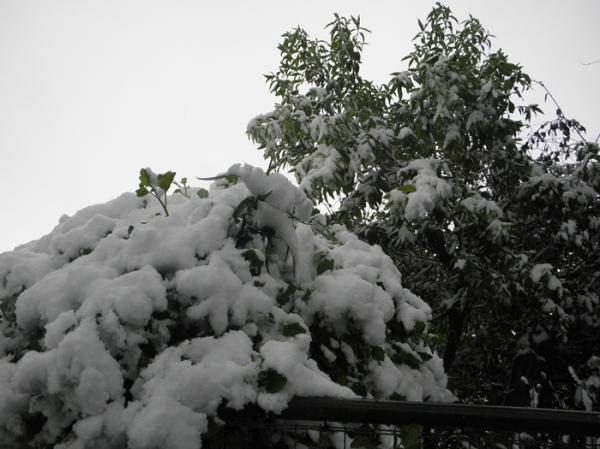 Nieve en Tres Arroyos 8/12