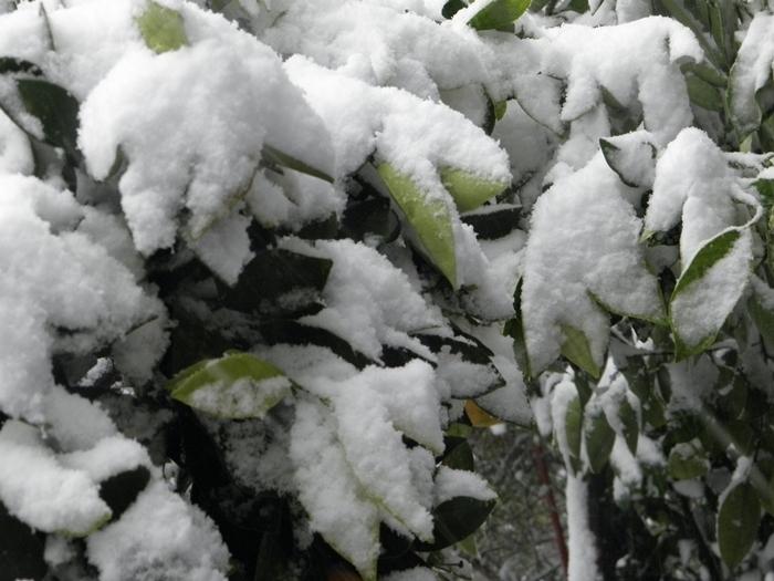 Nieve en Tres Arroyos 12/12