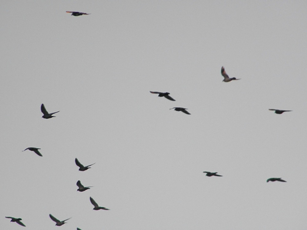 Feliz vuelo de palomas