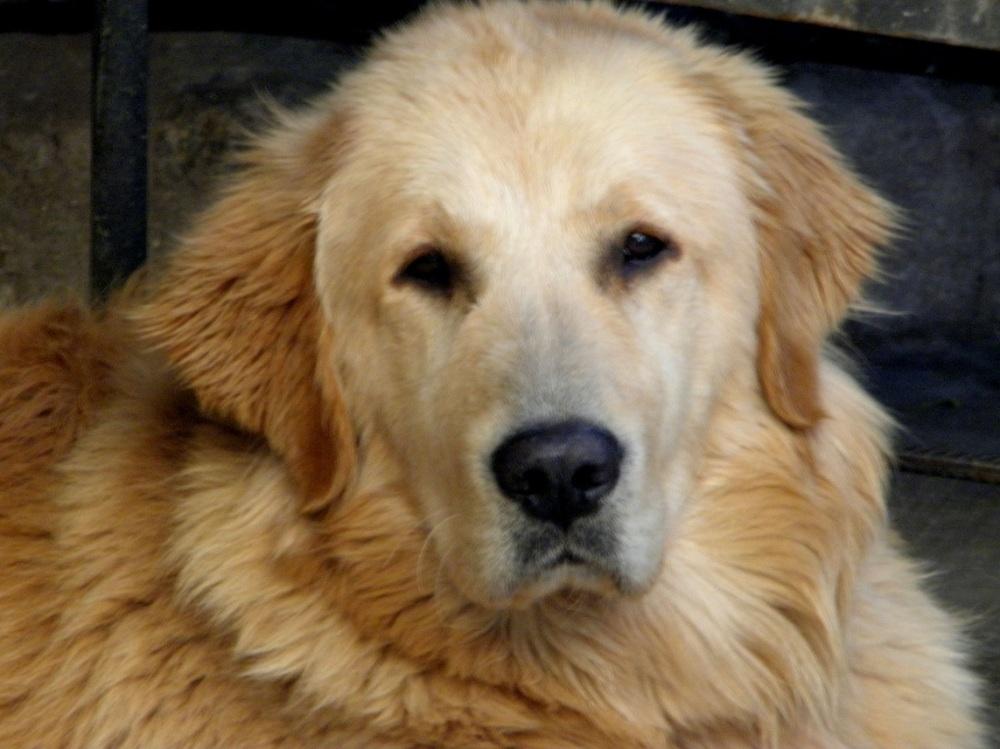 Laika, la perra de mi hijo