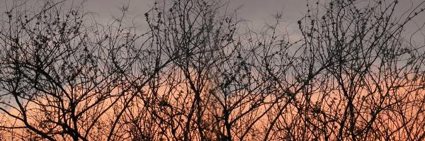 El naranja invadio el cielo