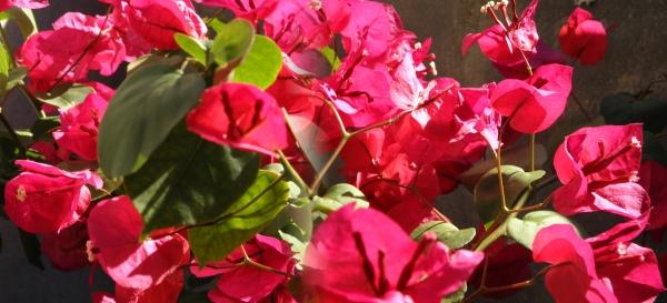 Imagen floral.