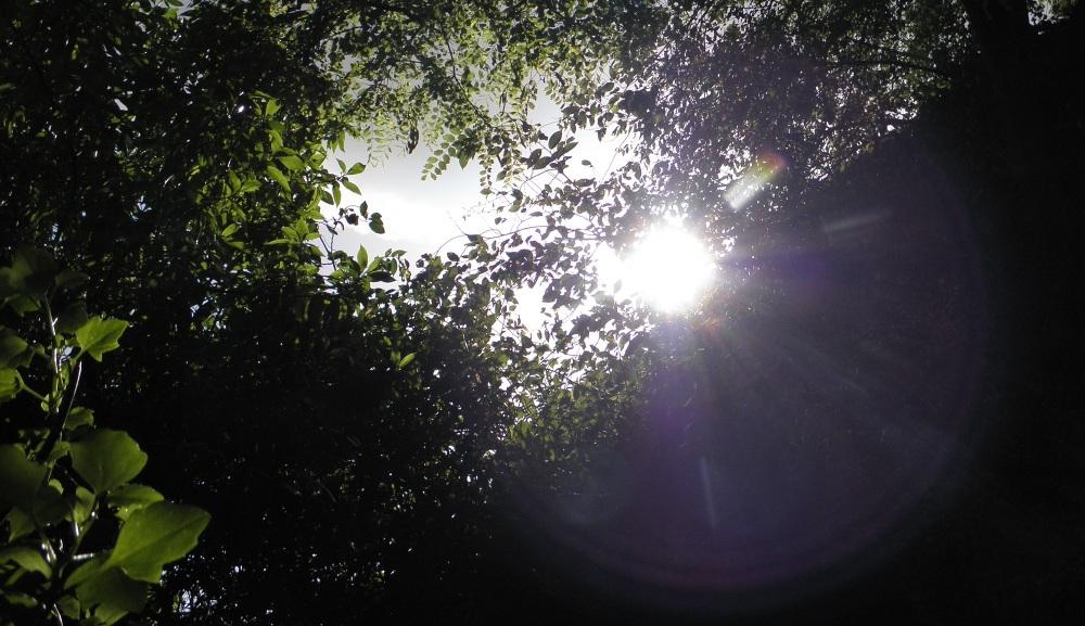 Luz de tarde