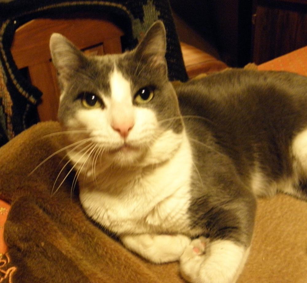 Mi querido Gato