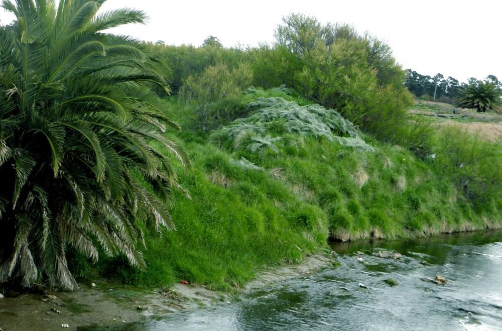 Arroyo del Medio III