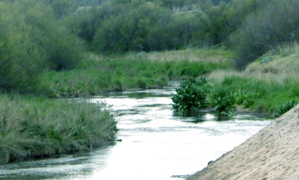 Arroyo del Medio VII