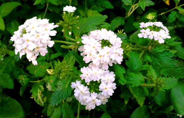 Primavera 5/10