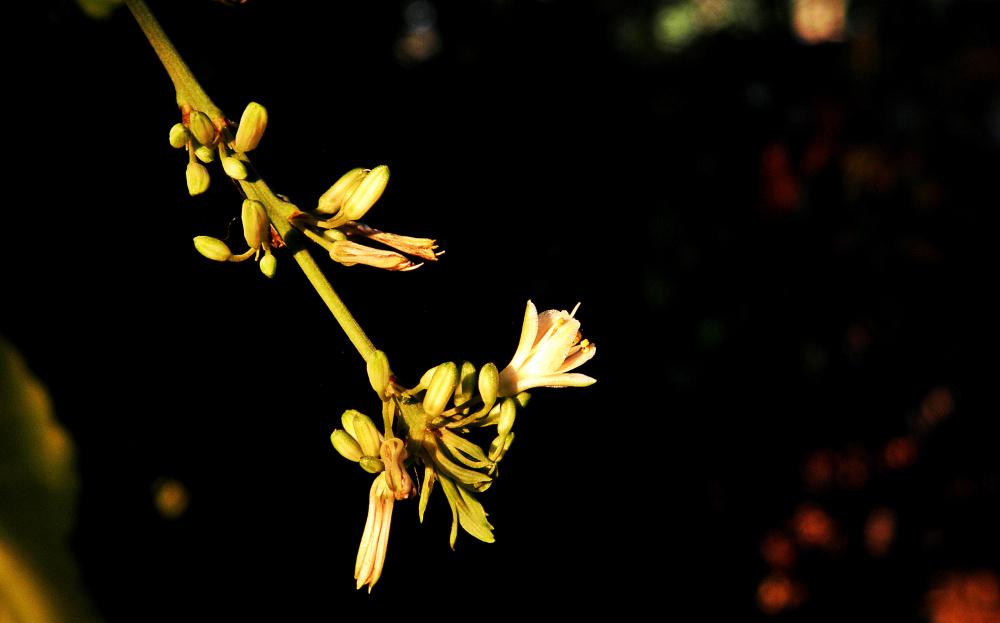 Flor de lazo de amor