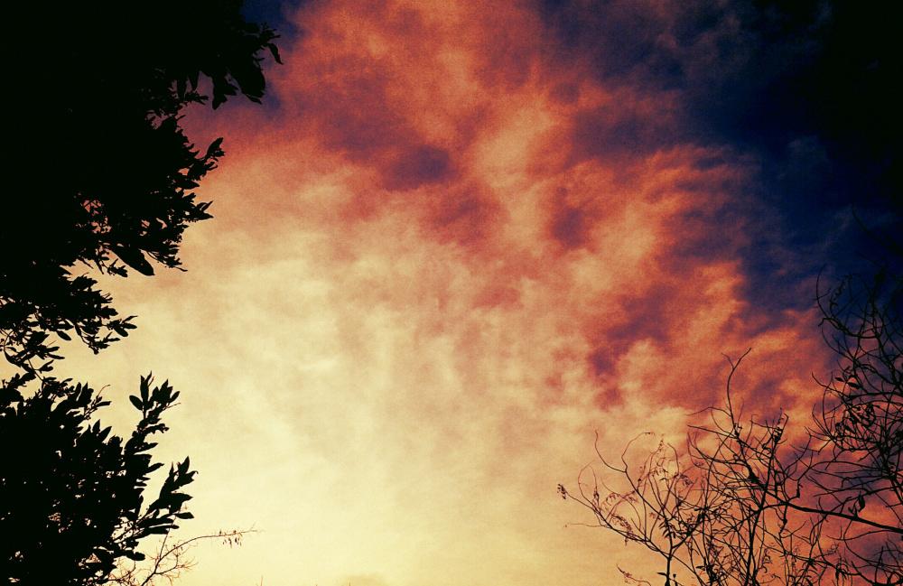 Naturaleza 3/15