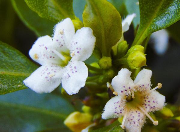 Florecimiento primaveral