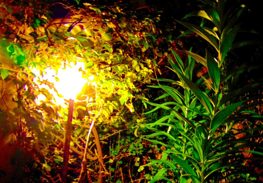 Luminosidad