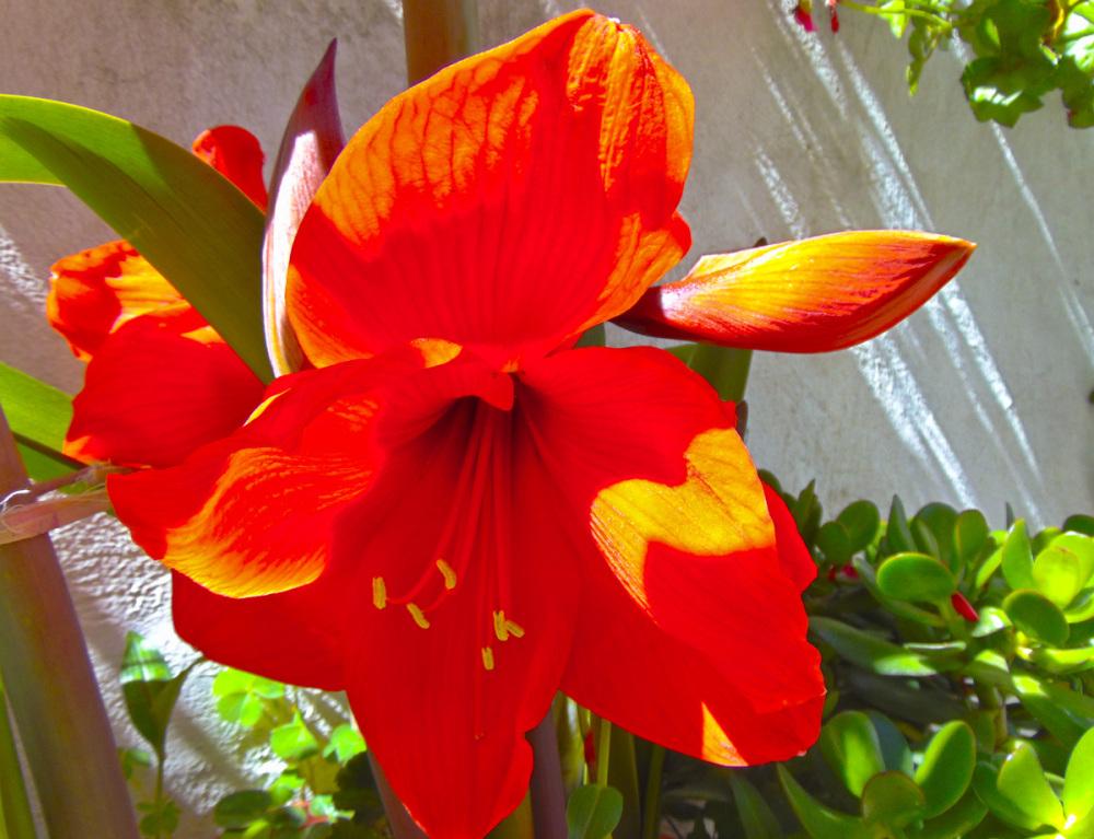 Primavera en el jardín 1 - 6