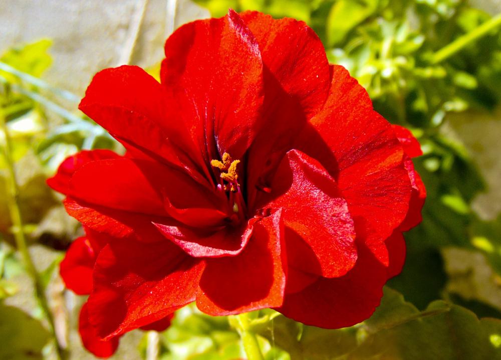 Primavera en el jardín 3 - 6