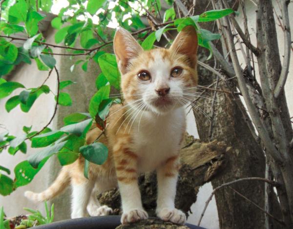 El gatito Simba en sus primeras aventuras 2 - 5