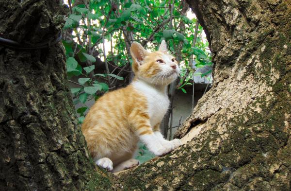 El gatito Simba en sus primeras aventuras 1 - 5