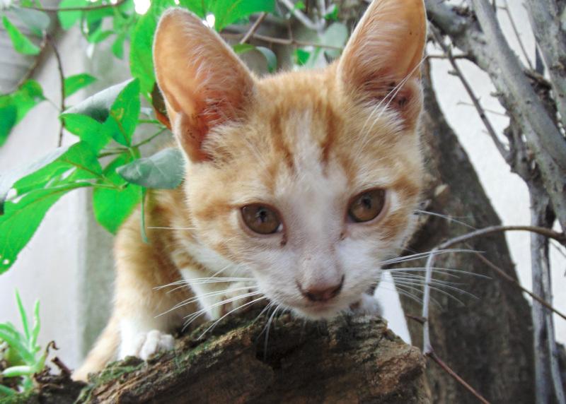 El gatito Simba en sus primeras aventuras 4 - 5