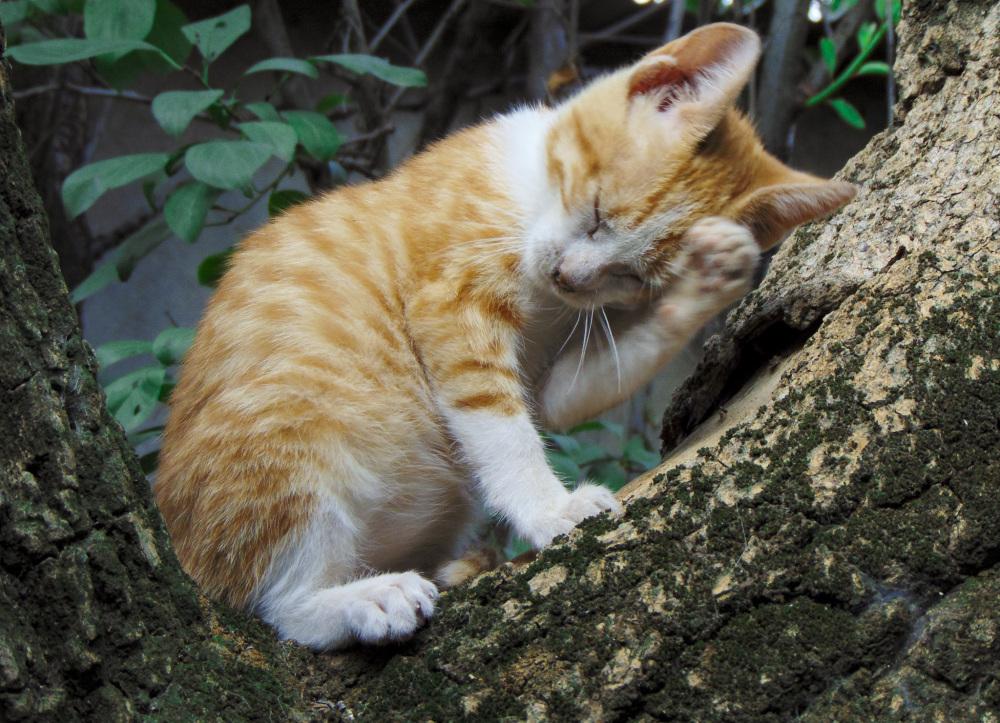 El gatito Simba en sus primeras aventuras 3 - 5
