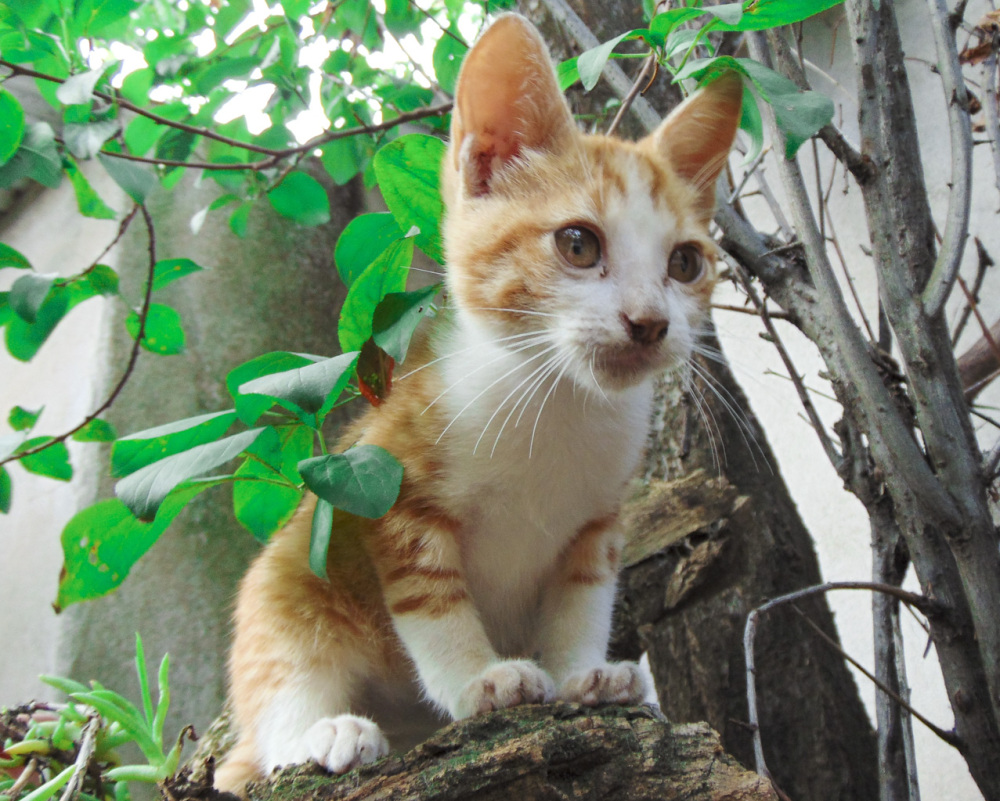 El gatito Simba en sus primeras aventuras 5 - 5