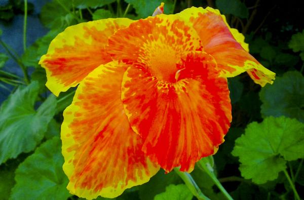 Flores 4 - 6
