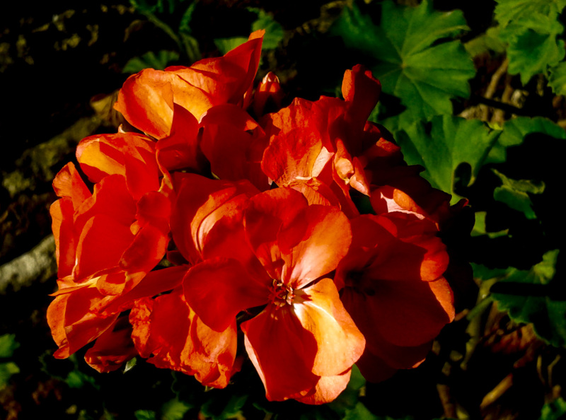 Flores  6 - 6